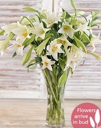 white-lillies-in-a-glass-vase-f15