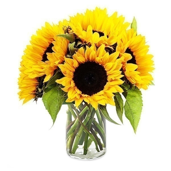 sun-flower-in-a-glass-vase-f42