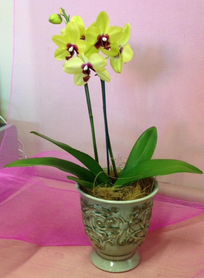 orchid-in-a-pottery-container-f35